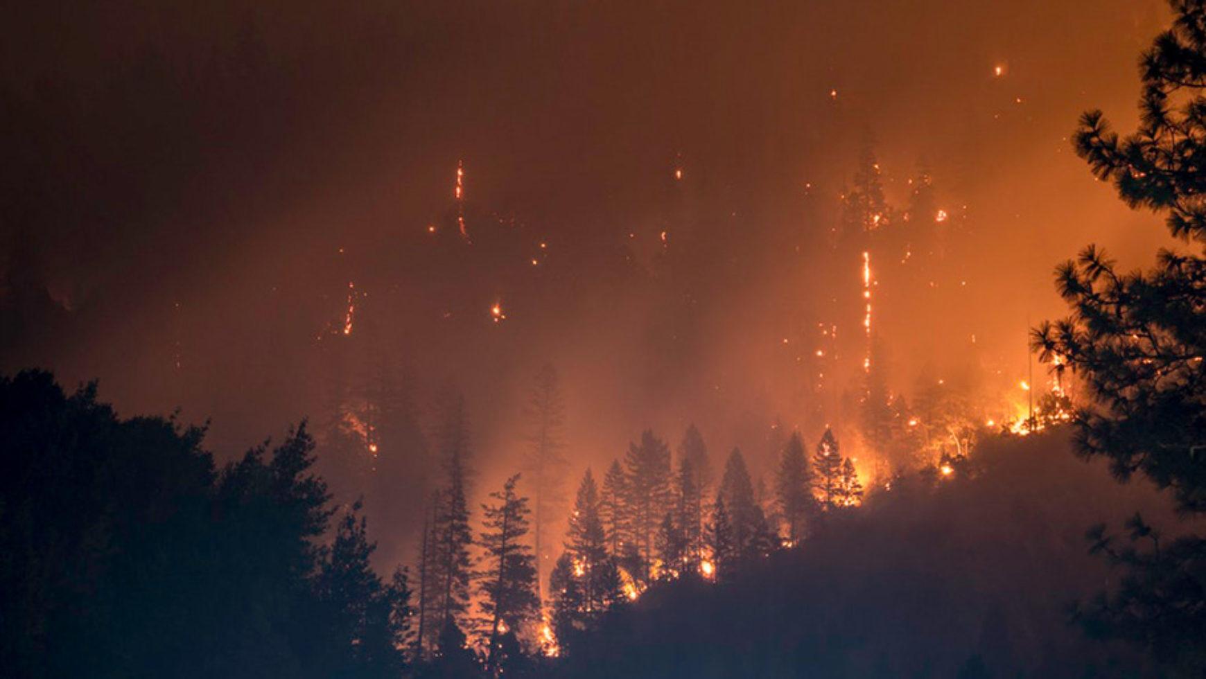 Nie pozwól by las spłonął